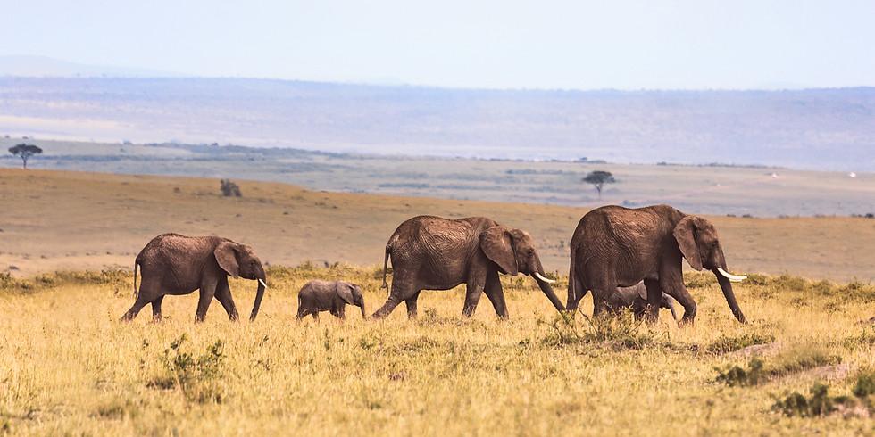 Masai Mara Experience Oct/Nov 2022