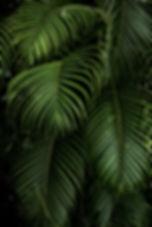 Yeşil bitkiler