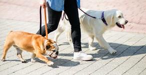 ペットを守るのは飼い主の役目、今やるべき事はただ一つ