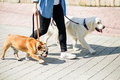 Dog sitter Soin Promenade des animaux de compagnie Service à la Personne Vendée Les Herbiers Saint Fulgent Les Epesses Sèvremont