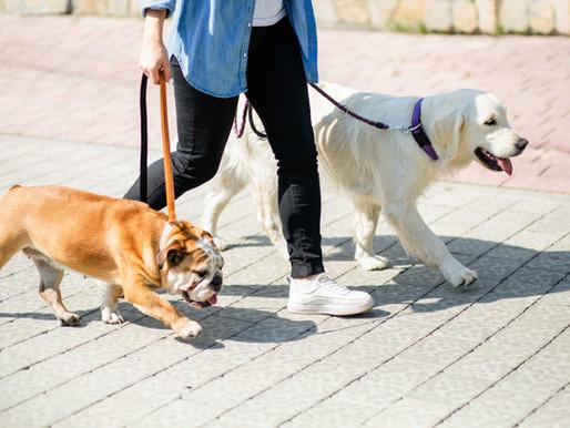 Cães incentivam a volta ao treino