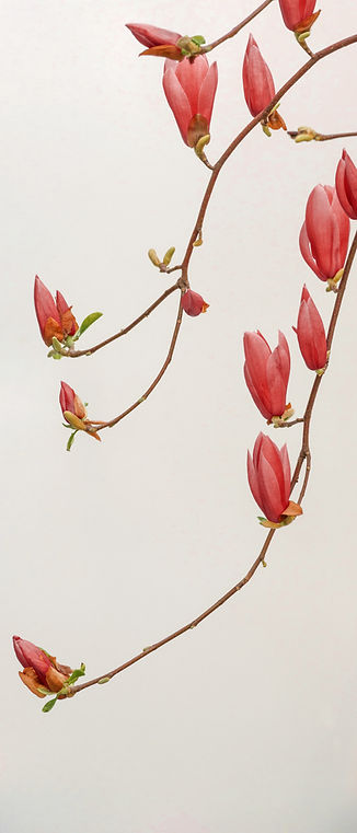 Branches de fleurs