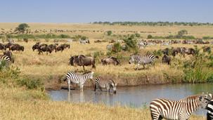 PARTNER: 🦁 Wild Heart Wildlife Foundation