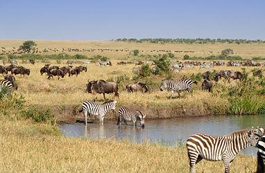 дикая природа животный мир живая природа