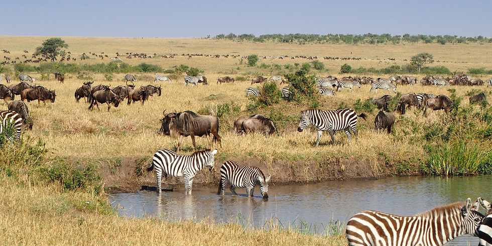 Bildervortrag Expedition Kenia - Tansania - Sansibar (von Ingo Schmittmann)