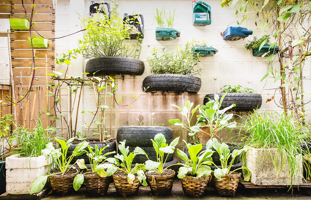 Plants are growing out of planters made from old tires and oil jugs, installed on the side of a building wall.