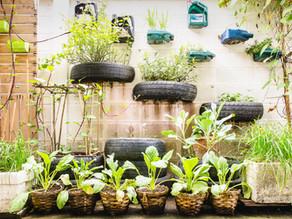 Horticultural vs. Mechanical
