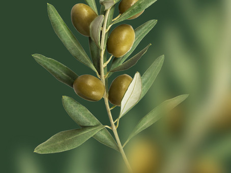 Covid-19, God's Olive Branch