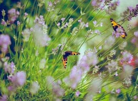 In jeder Raupe steckt ein Schmetterling
