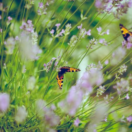 מתנות אביביות טבעיות מופלאות