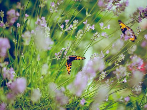 Goda nyheter: Storbritanniens vackra ängar kan vara på väg tillbaka