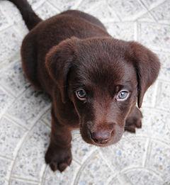 dogpuppy