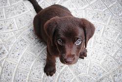 かわいい子犬