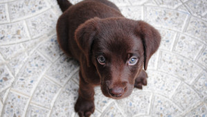 What To Expect When You are Expecting (A New Pet, That is) - Puppy Prep!