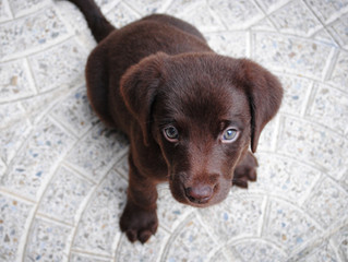 Puppies weaning age and implications for dog welfare - article from Purdue University