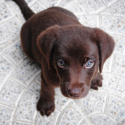 Heartless Puppy Scammers Still Rampant In NSW