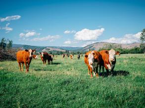 Control livestock location