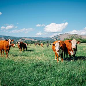 Highwater Farms/Aspen Valley Land Trust