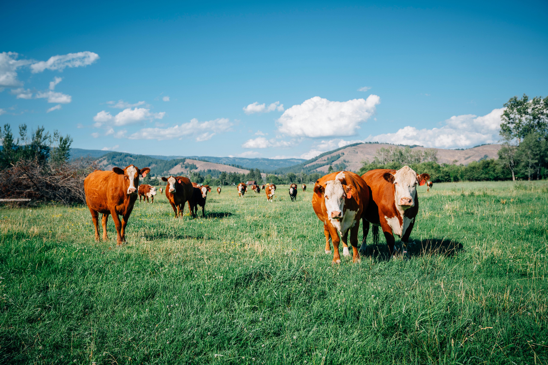 Médiation agricole PRÉSENTIEL