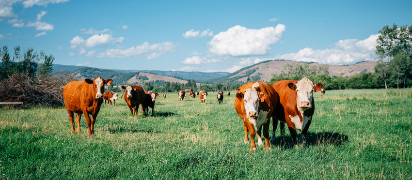 ANIMAL AGRICULTURE'S SIGNIFICANT ROLE IN THE DEGRADATION OF THE ENVIRONMENT