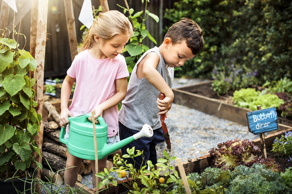 boy and girl in garden with watering can and shovel with tomatoes, kale and raised bed
