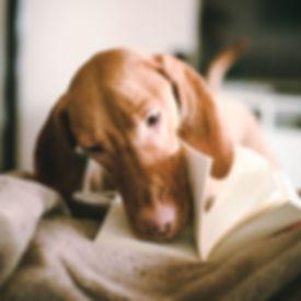 Милая собака