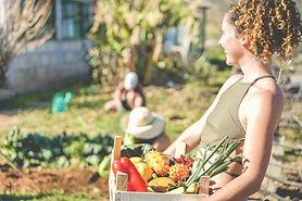 Récolter des légumes