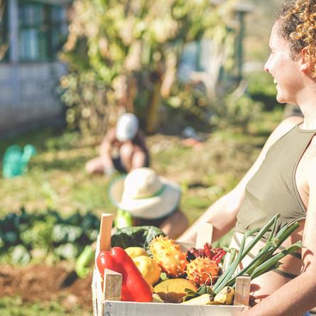 Harvesting Humanity: West Island Solidarity Gardens