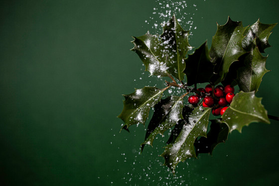 Five homeopathic remedies to help you through this holiday season.