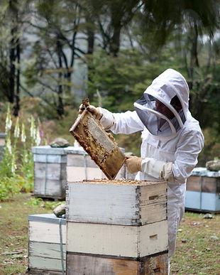 Beekeeper with Honeycomb