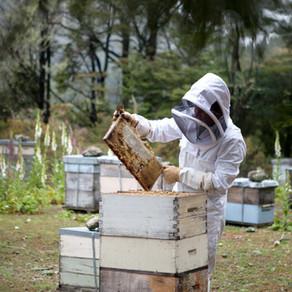 Η δουλειά του μελισσοκόμου