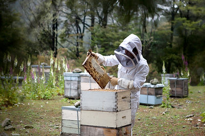 Apiculteur avec nid d'abeille