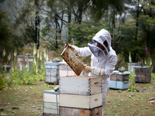 Best Beekeeping Products in India 2020