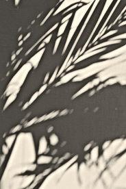 Sombra de la planta