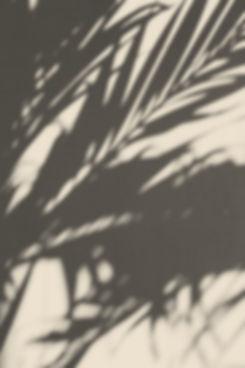 Plant Shadow