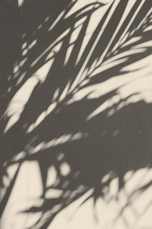 Plant schaduw