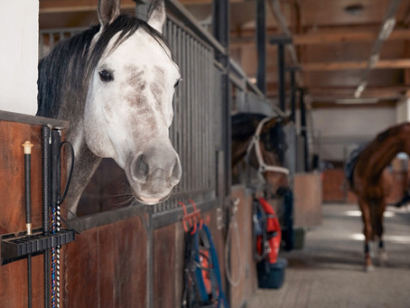 Everything you need when you buy a horse