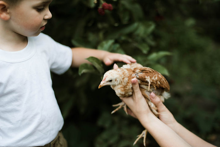 Boy with Chick