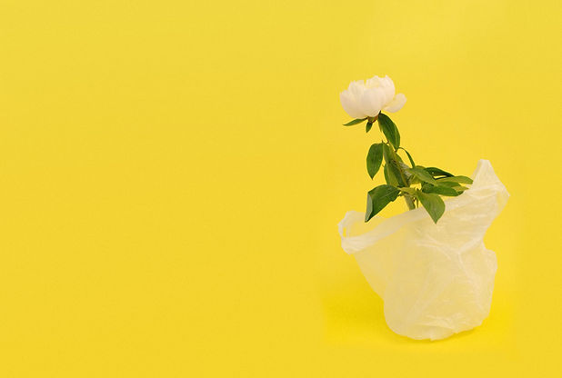 Flower in Plastic Bag
