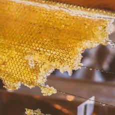 דבש מכוורת שמיר