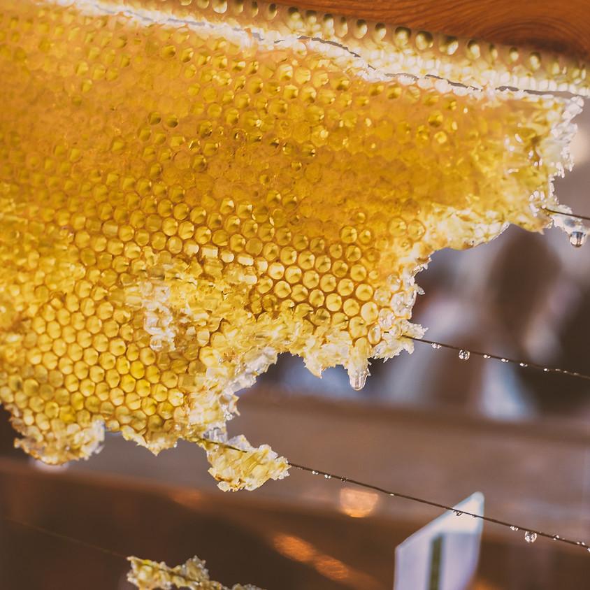 Dégustation de miel avec un producteur