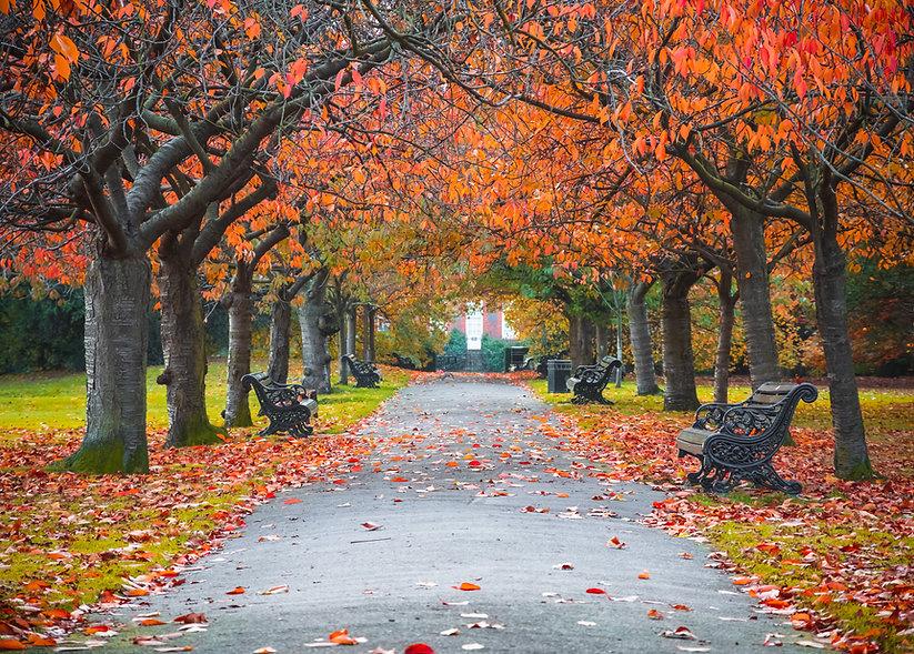 Garez-vous à l'automne