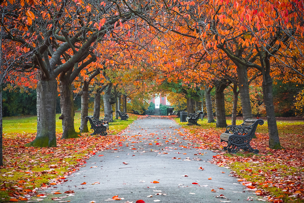 colorful fall tress in a park