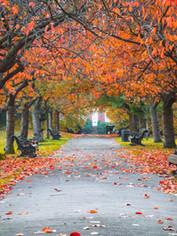 11/1(Mon) Autumn Song