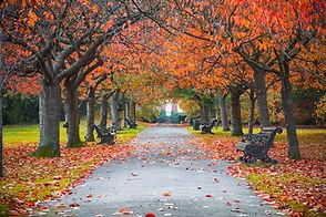 Parker om høsten