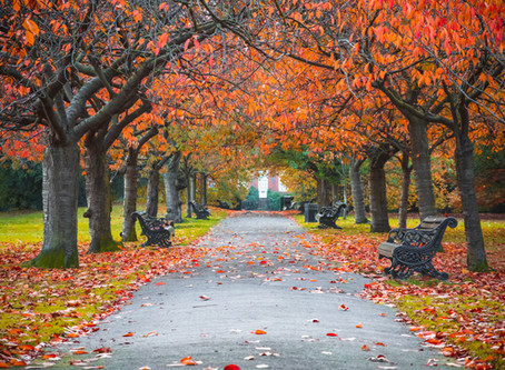 秋の気配 ~英会話~