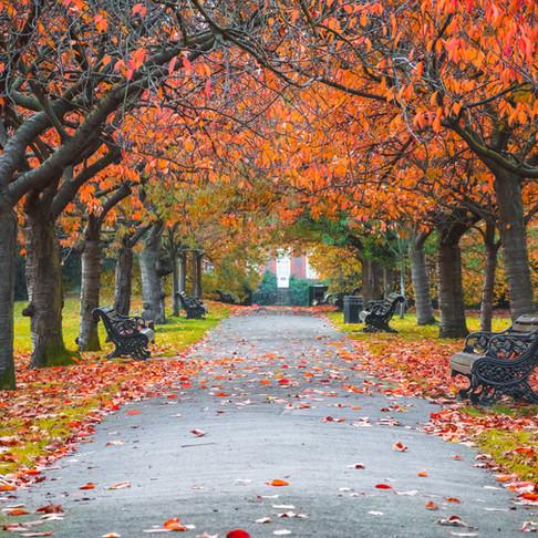 Where To See Fall Foliage Near Washington DC