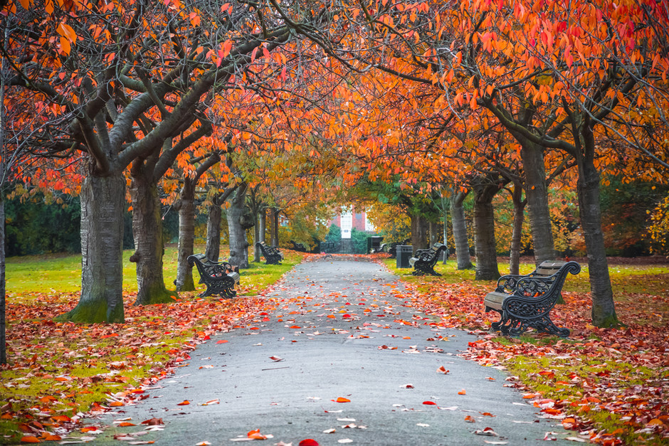 Fall is a Season that Lives in our Hearts