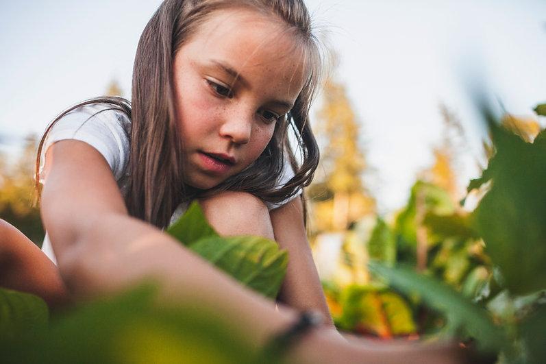 Girl Harvesting Vegetable