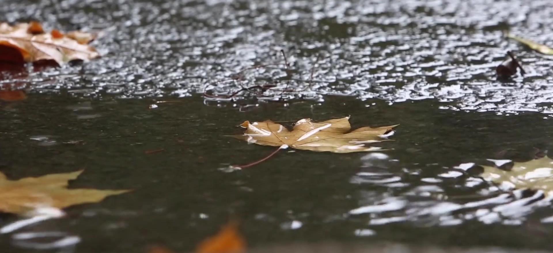 automne flaques